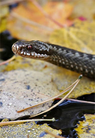 Picture of Adder